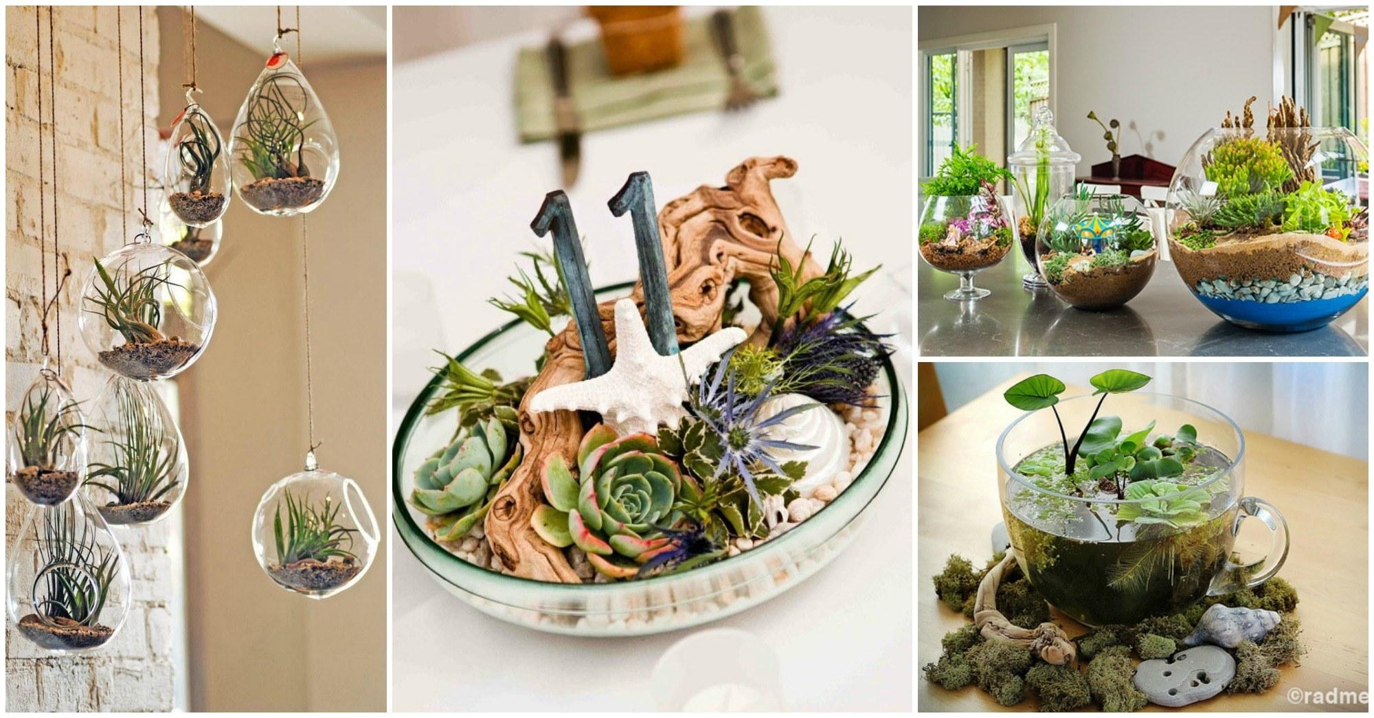 Adorable DIY Terrariums to Create at Home