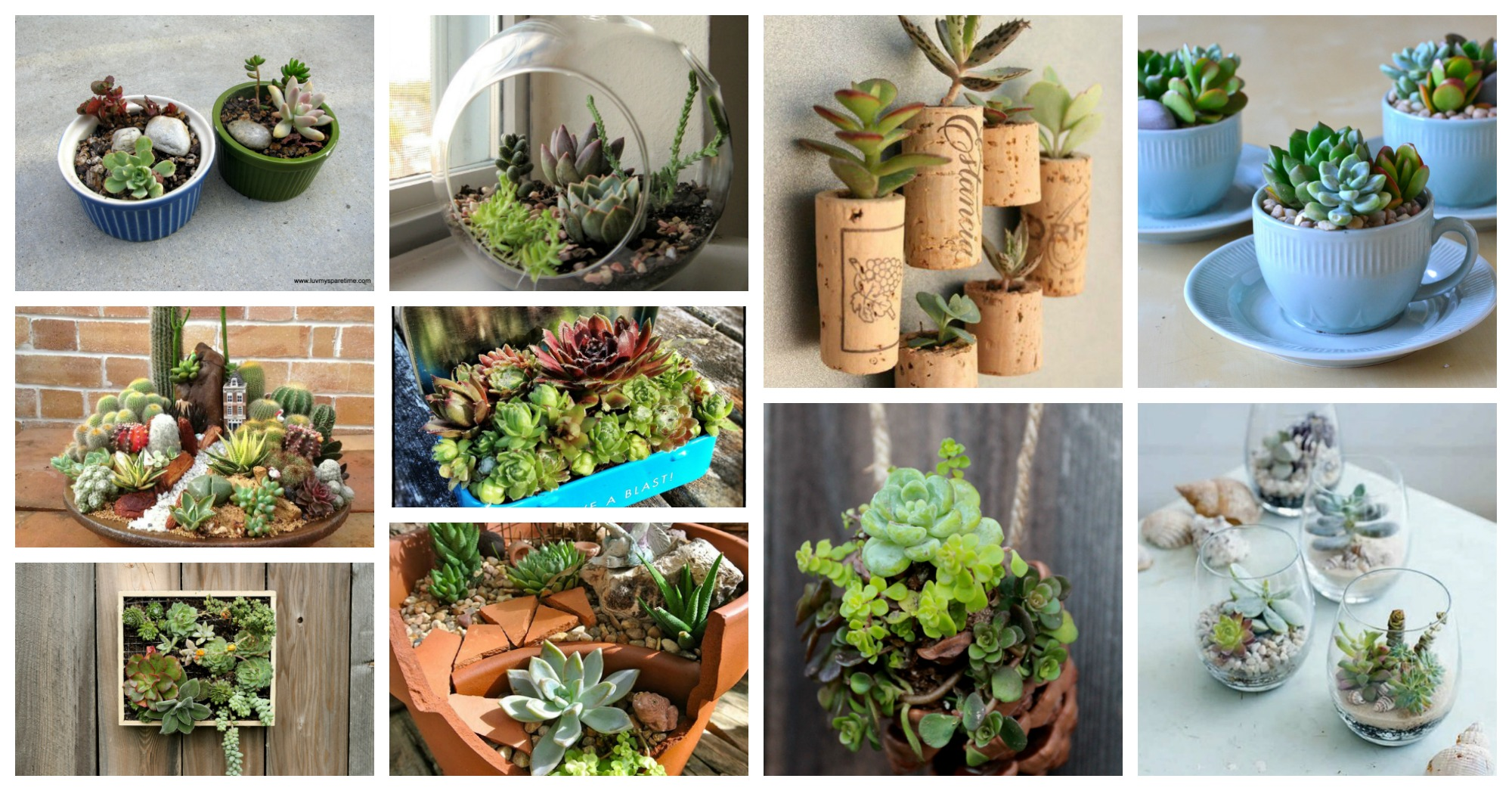 Stunning Mini Succulent Gardens That You Would Love To Have