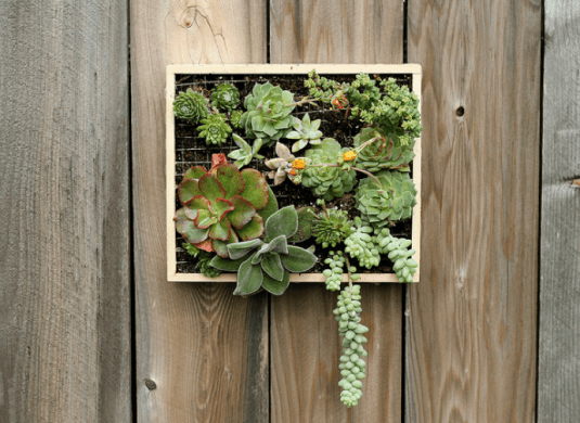 wall-mounted-succulent-garden