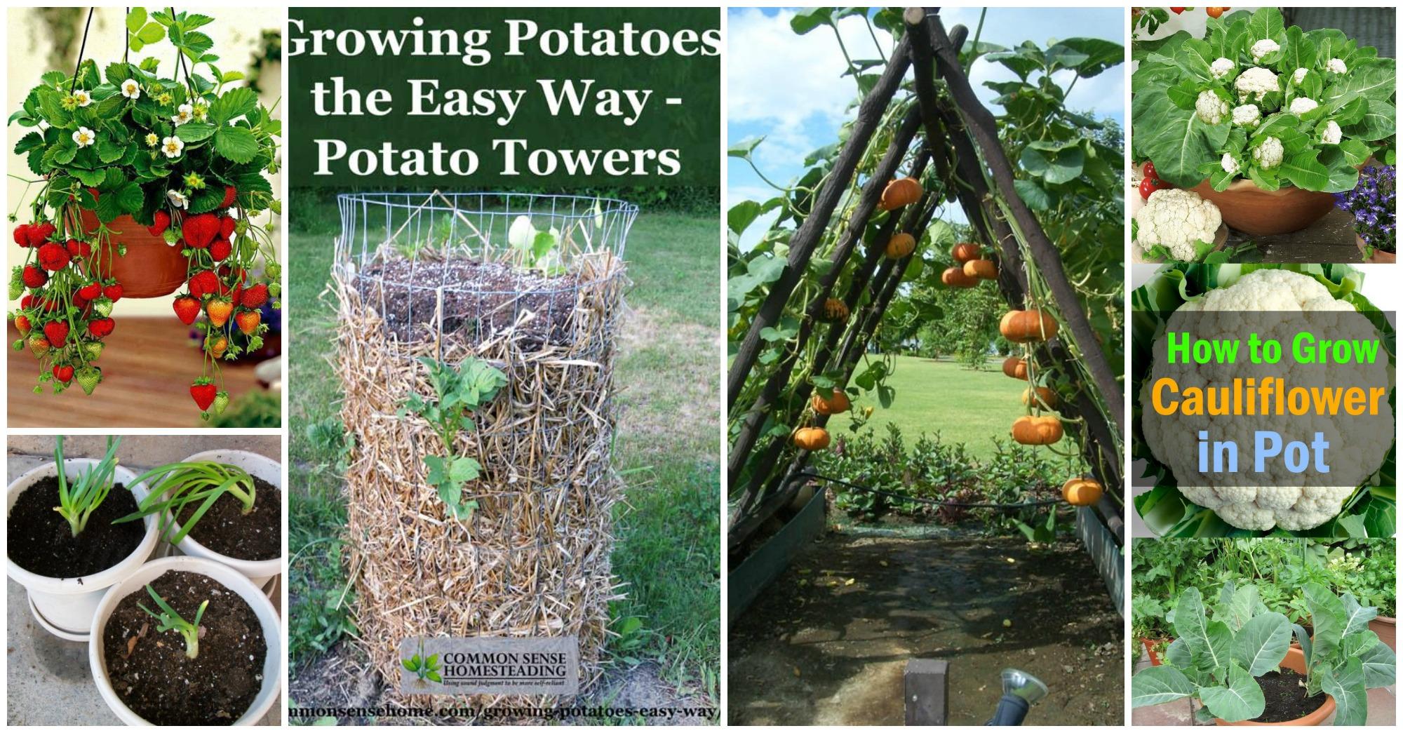 11 Smart Ways to Grow Veggies and Fruits in Your Garden