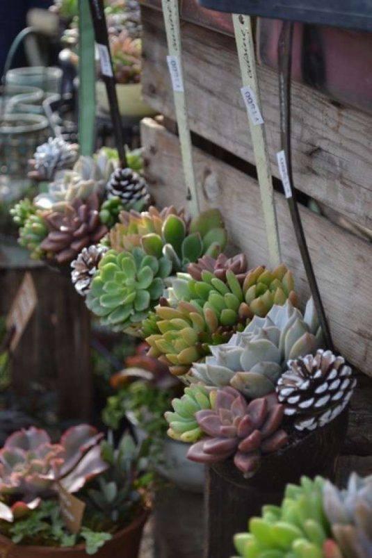 Woontrendz-vetplanten-in-pollepel