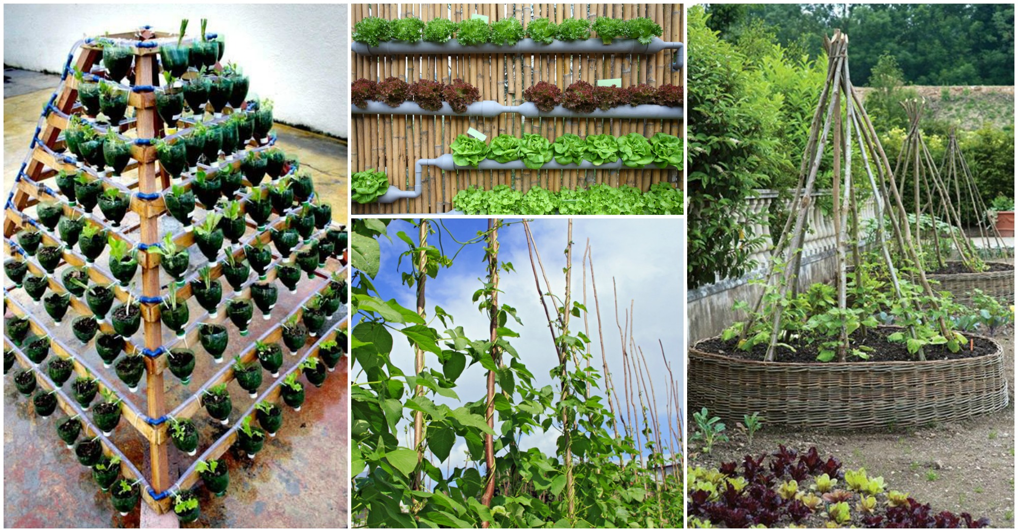 10 DIY Garden Ideas People Use to Grow Fruits and Vegetables