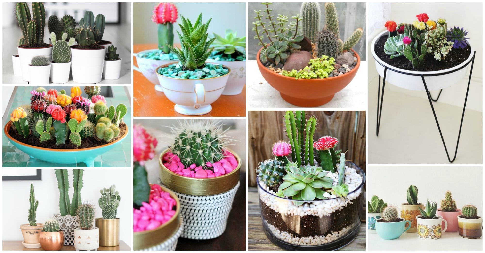 Smart Tips For Growing Cactus Indoors