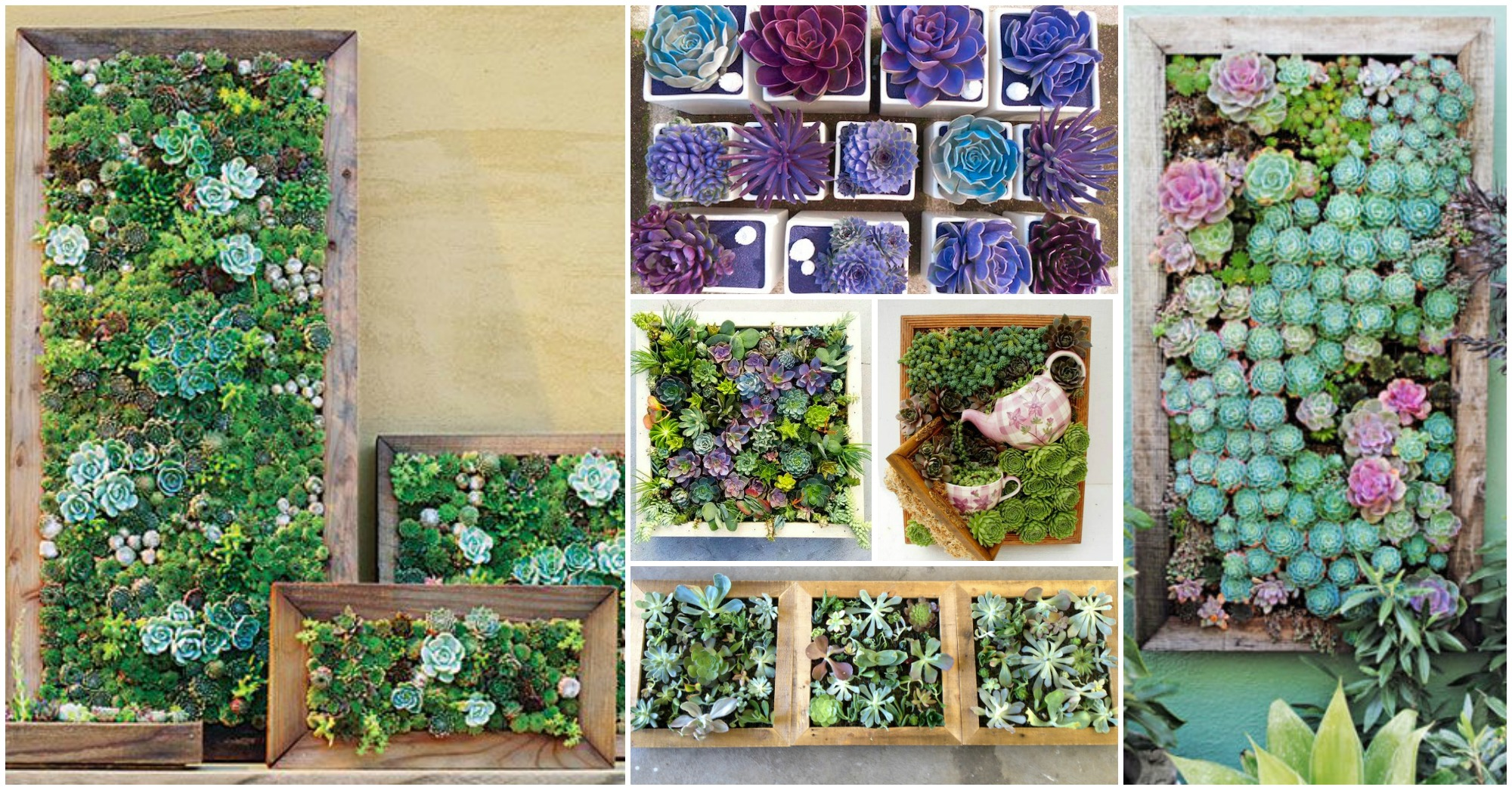 16 Amazing Living Succulent Frames To Add Life To Your