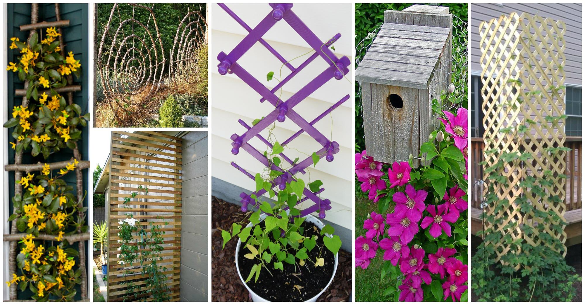 DIY Garden Trellis Archives