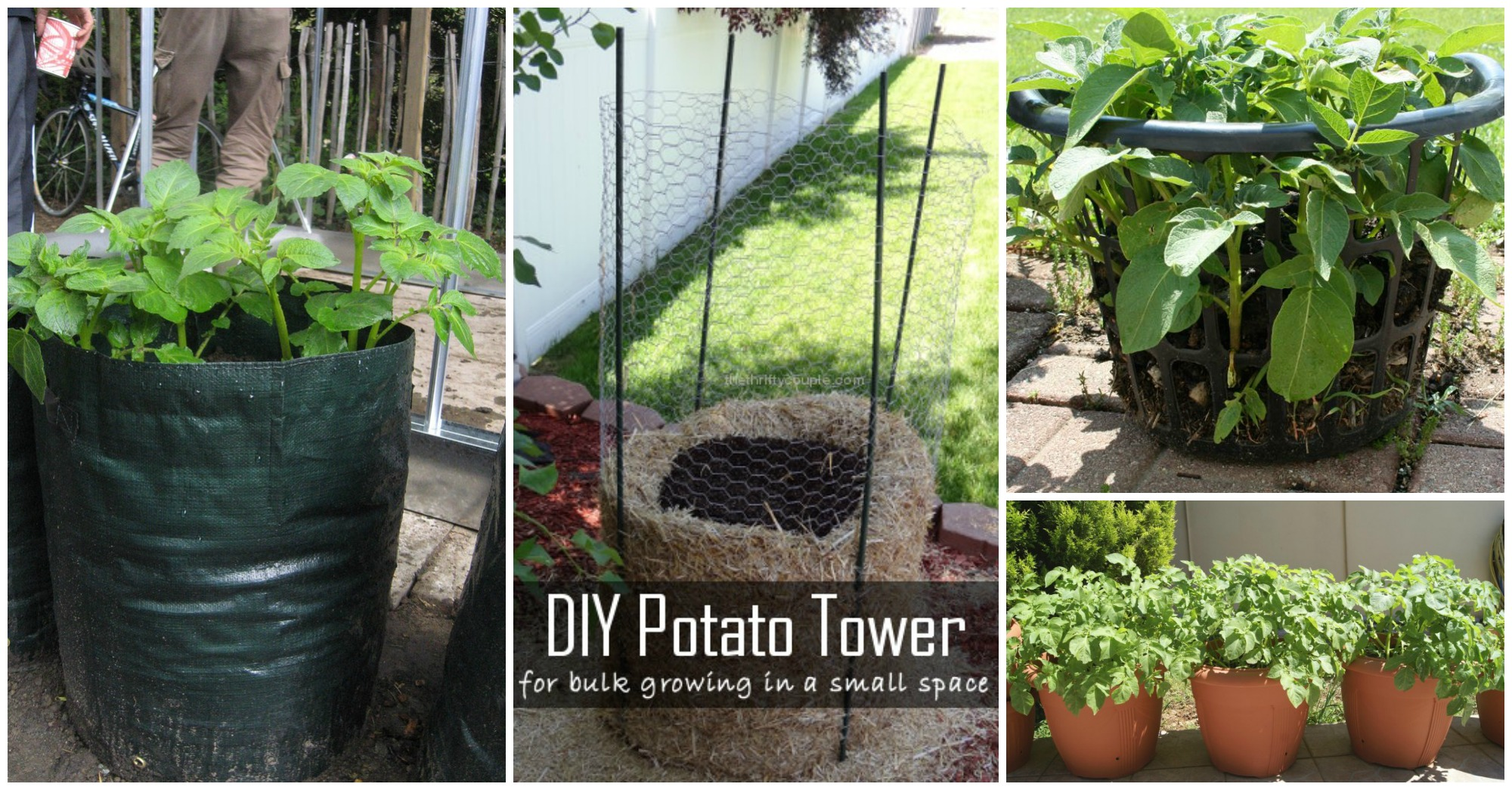 4 Ways To Grow Potatoes in Your Small Yard