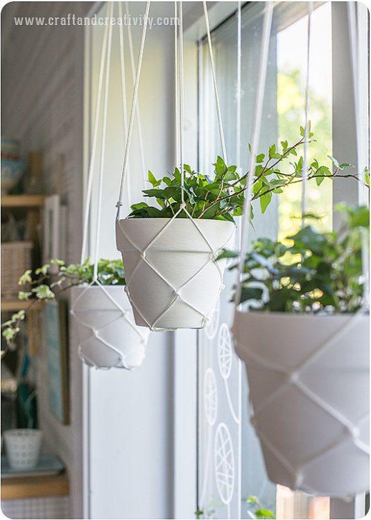 15 Small Windowsill Plants That Will Impress You