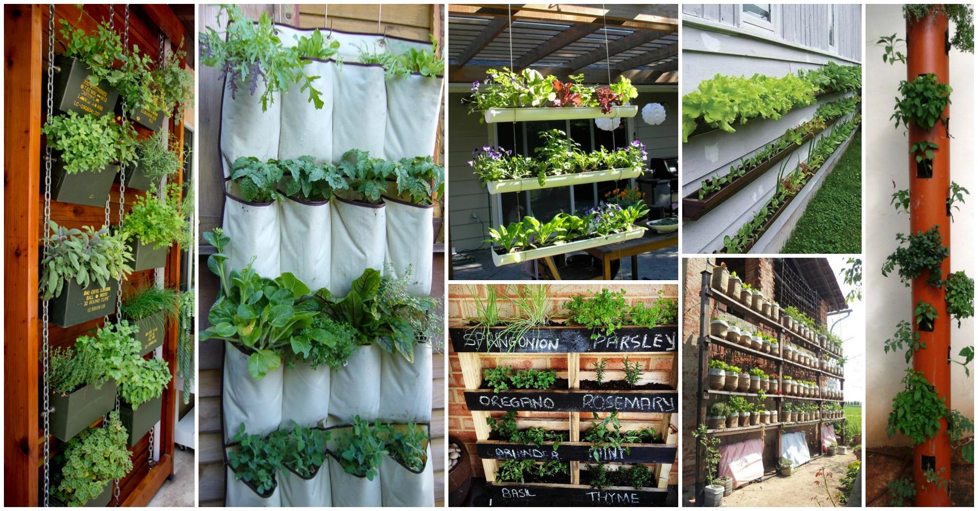 Vertical Herb Garden In Your Kitchen Vertical Herb Gardens For Small Yards