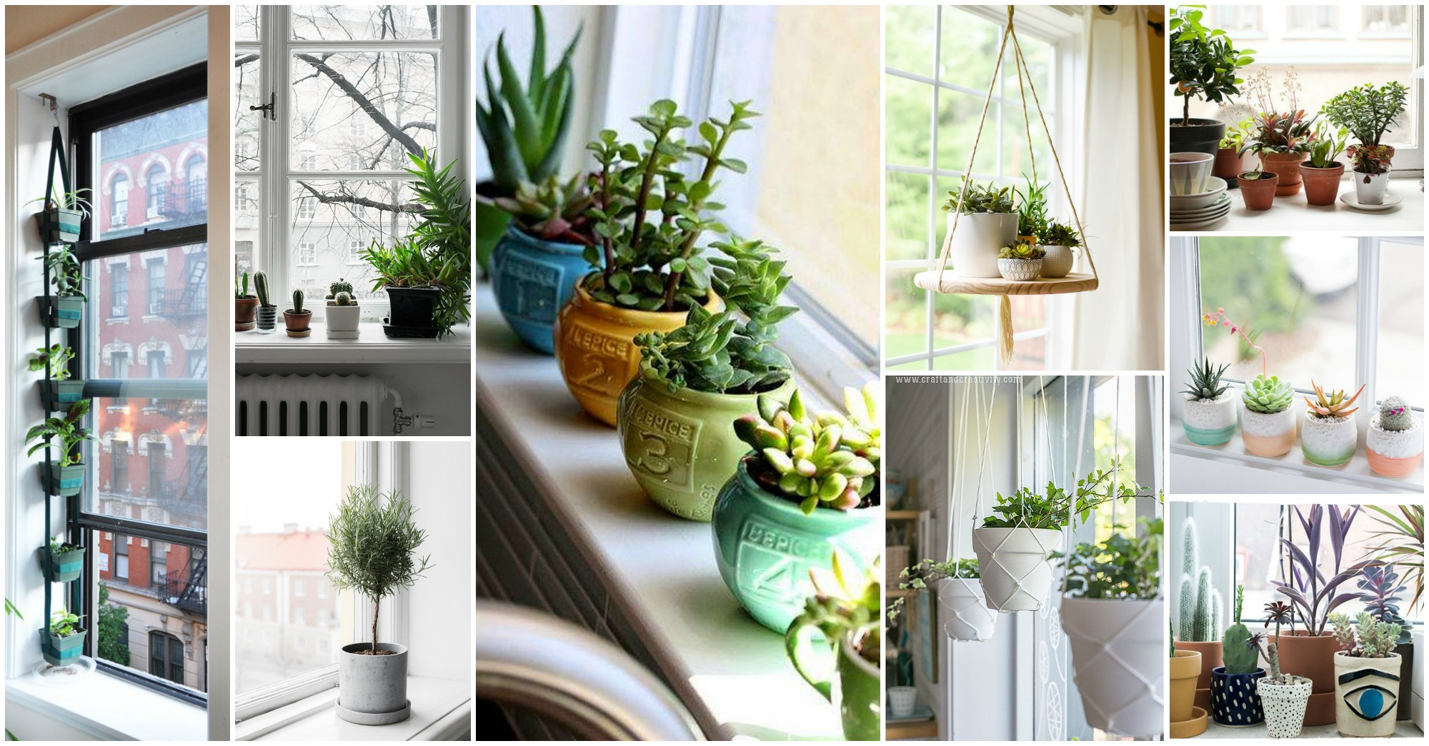 15 Small Windowsill Plants That Will Impress You