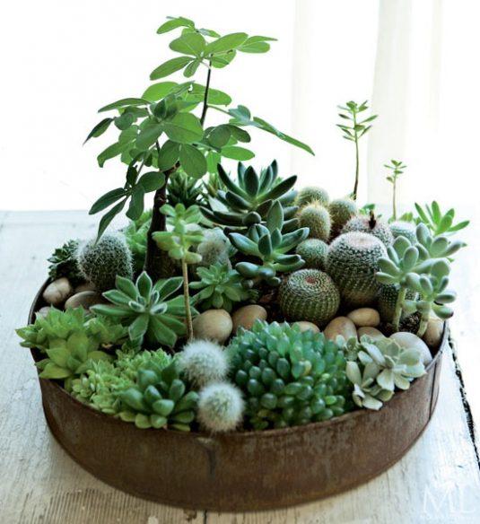plant3