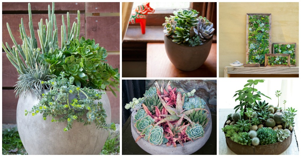 Beautiful Succulent Decorations for Your Home