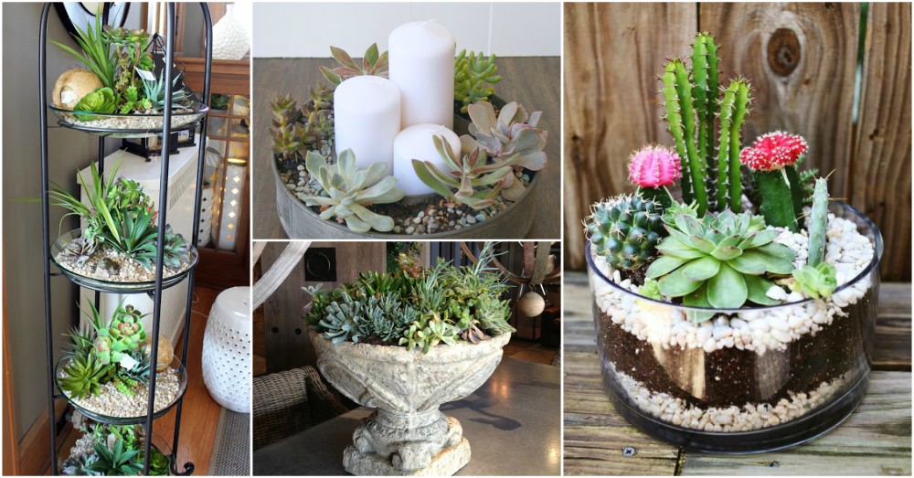 Having Too Many Succulents Create Stunning Diy Decoration