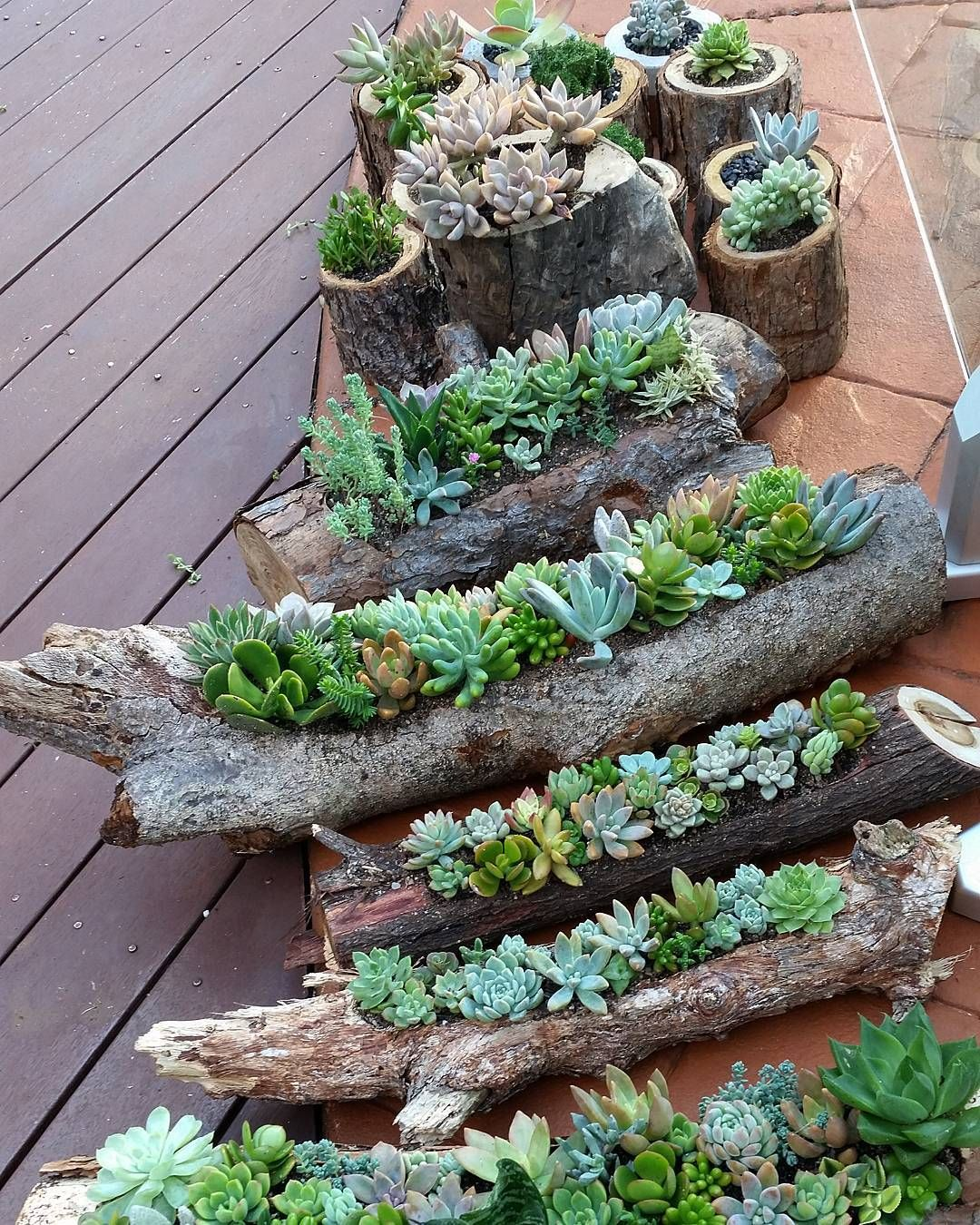 Diy Flower Gardening Ideas And Planter Projects: DIY Log Succulent Planter Sounds Like An Excellent Idea