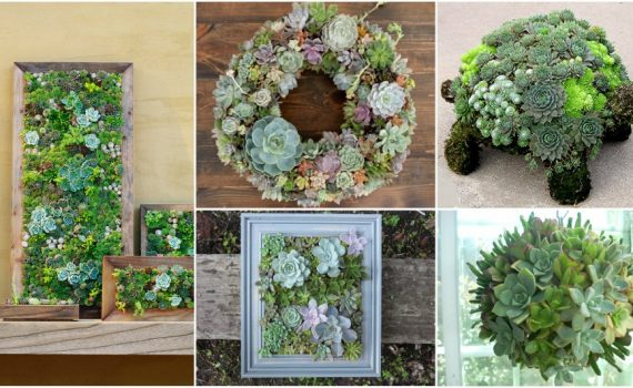 The Best DIY Decor Ideas Ever That You Can Make With Succulents