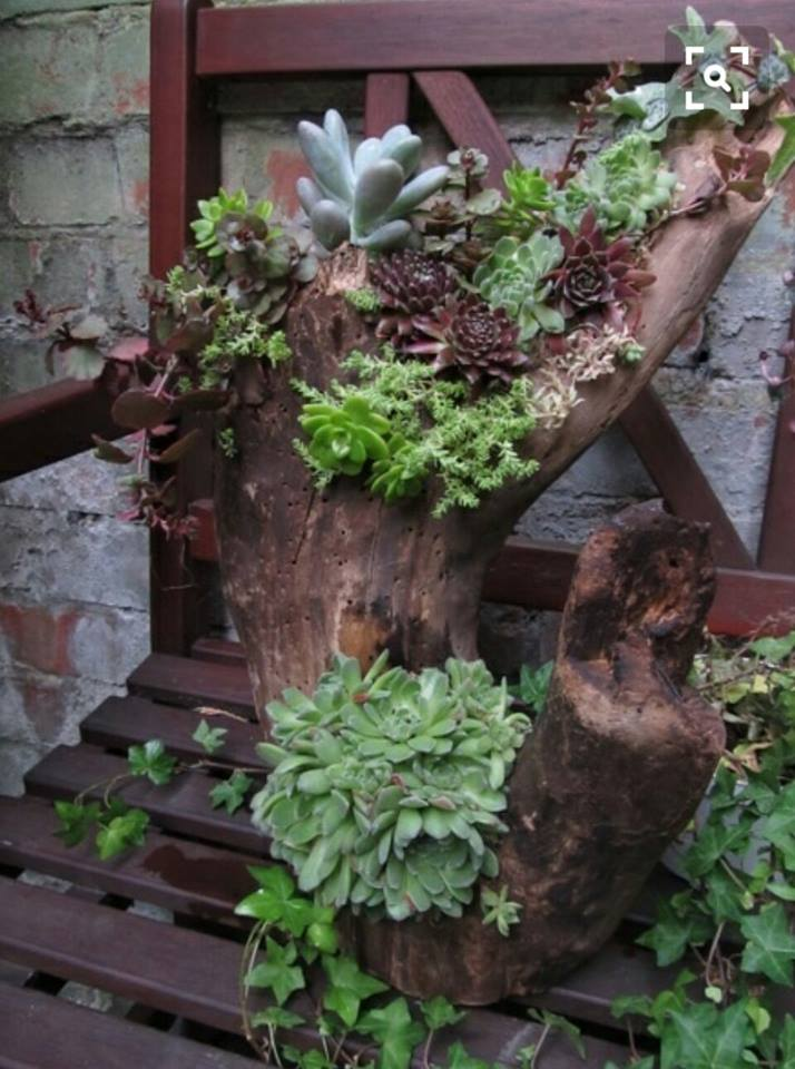 Diy Log Succulent Planter Sounds Like An Excellent Idea