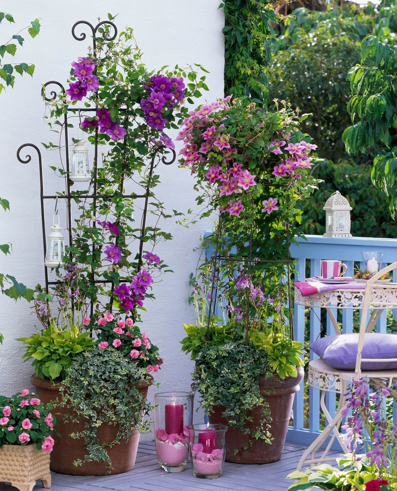 Gap gardens - balcony garden with mixed containers of clemat.