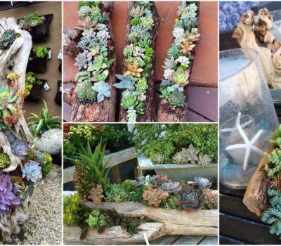 DIY Log Succulent Planter Sounds Like An Excellent Idea For Your Garden