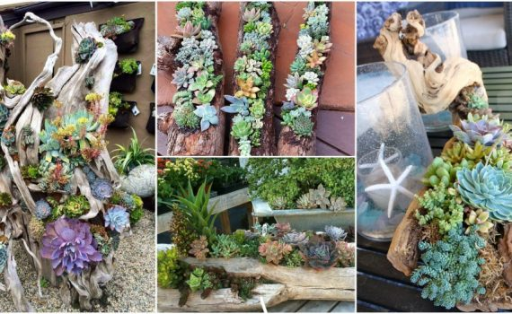 DIY Log Succulent Planter Sounds Like An Excellent Idea For Your Garden