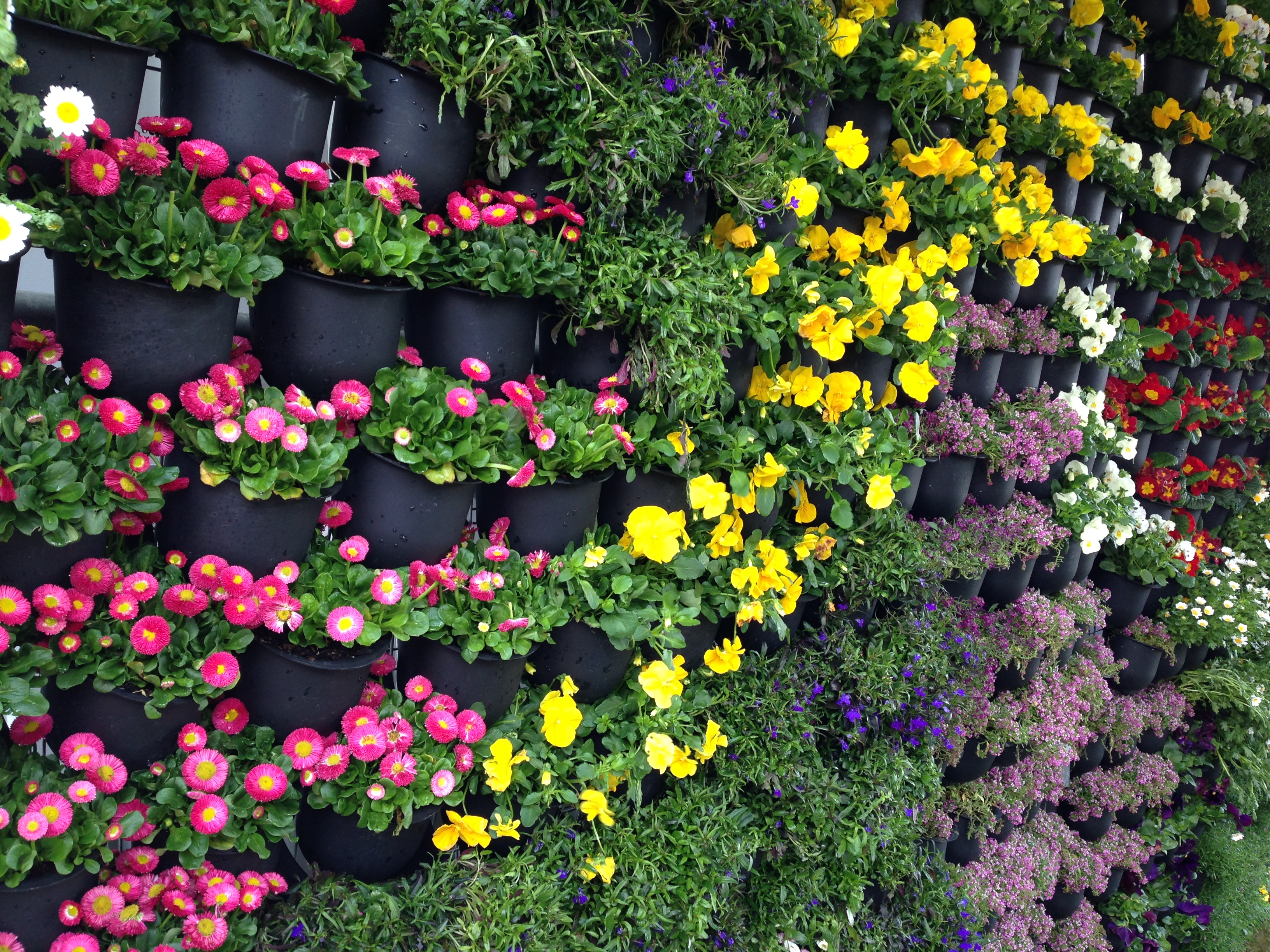 Ground Cover Plants You Can Walk On