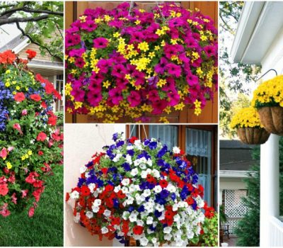 Important Tips For Hanging Flower Basket Like A Professional