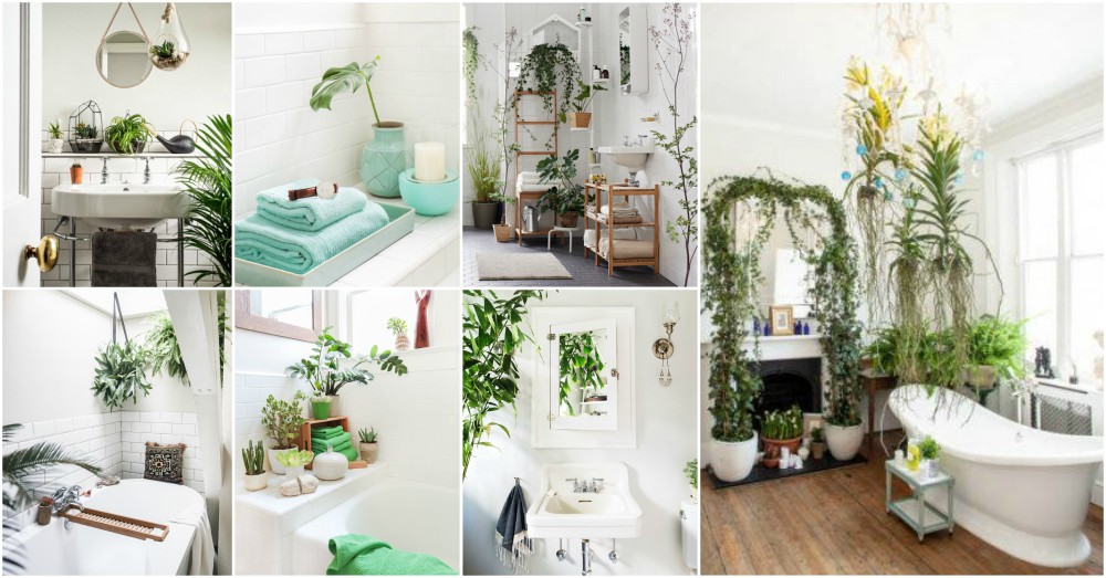 Important Bathroom Plant Tips To Help You Do It The Right Way