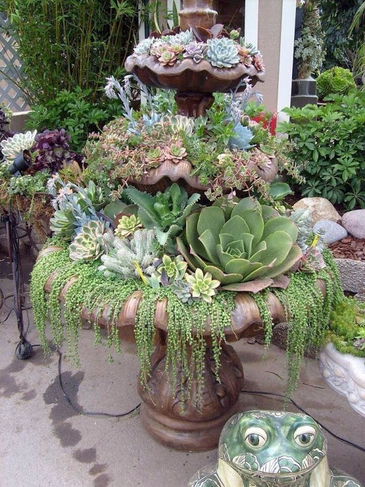Succulent garden ideas and tips to grow them outdoors Can succulents grow outside