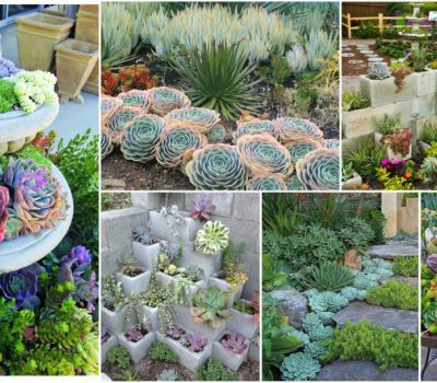 Succulent Garden Ideas And Tips To Grow Them Outdoors
