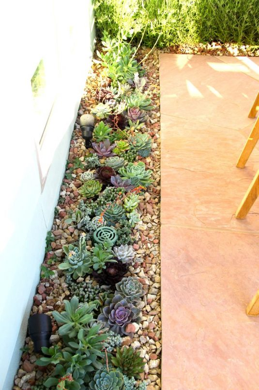 Succulent garden ideas and tips to grow them outdoors for 1000 designs for the garden and where to find them