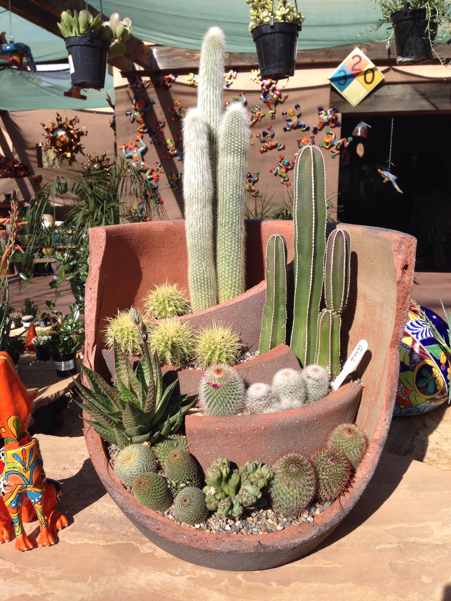 How To Plant Cacti Outdoors?