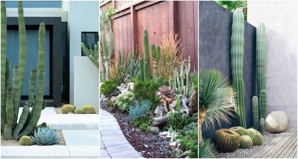 Outdoor Cactus Garden Ideas For The Best Looking Landscape
