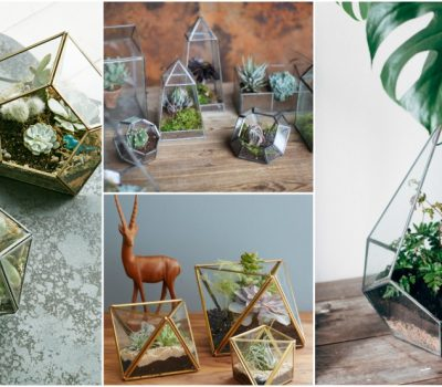 Geometric Terrarium Ideas And Tips To Make Your Own