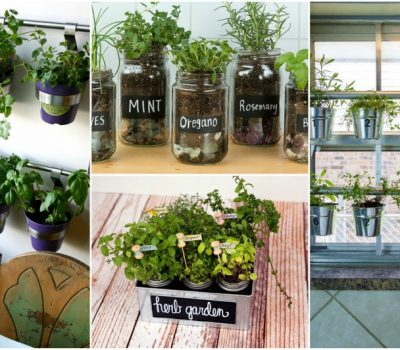 Indoor Herb Garden Ideas And Helpful Tips For Maintaining