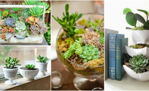 Succulent Tips To Maintain Them The Right Way