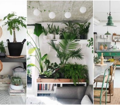 Indoor Plant Decor Ideas To Freshen Up Your Home