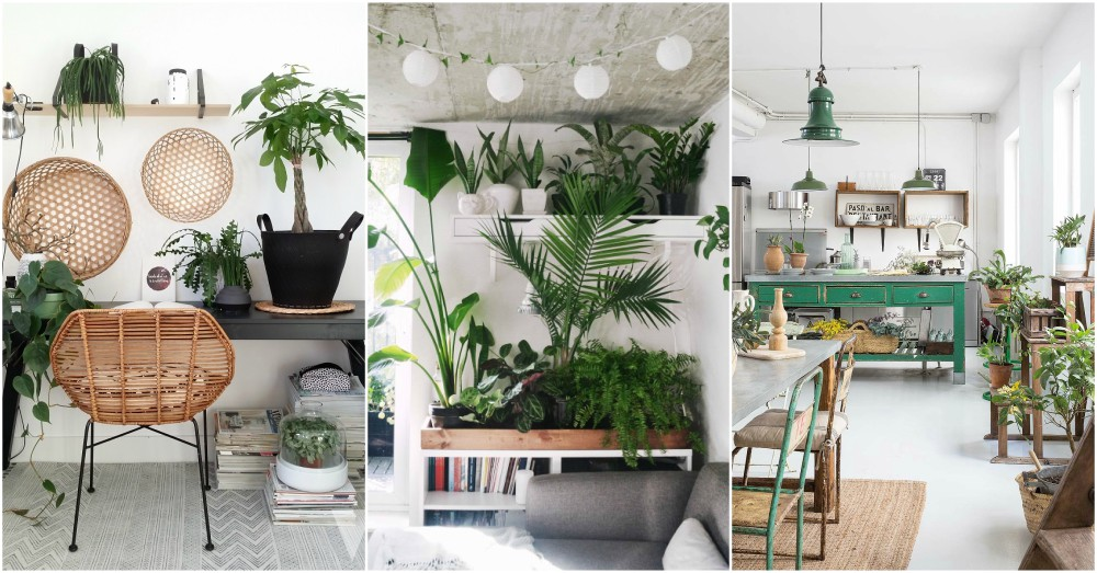 Indoor plant decor ideas to freshen up your home for Living room with indoor plants
