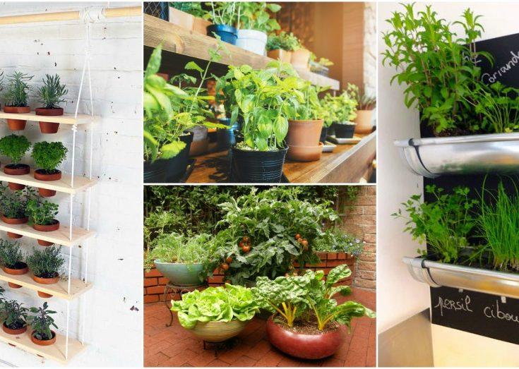 Grow Your Own Food With Indoor Vegetable Garden