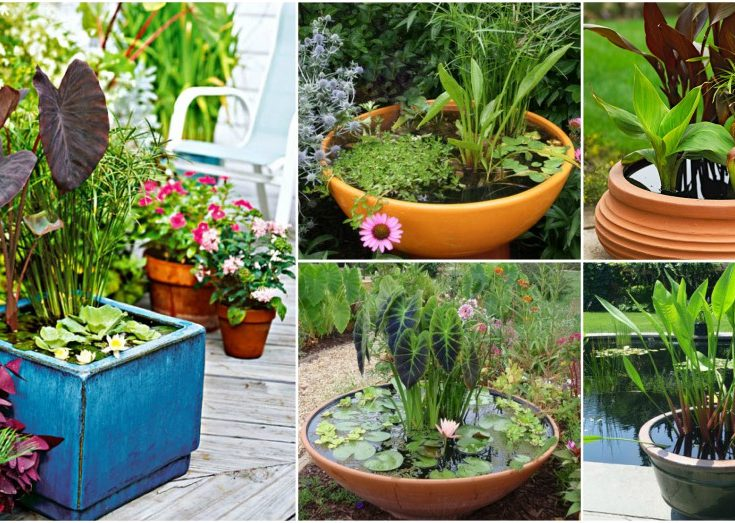 DIY Water Container Garden For A Stunning Patio