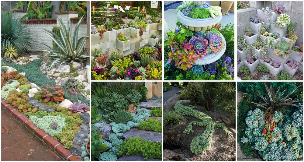 Brilliant Ideas For Your Succulent Garden