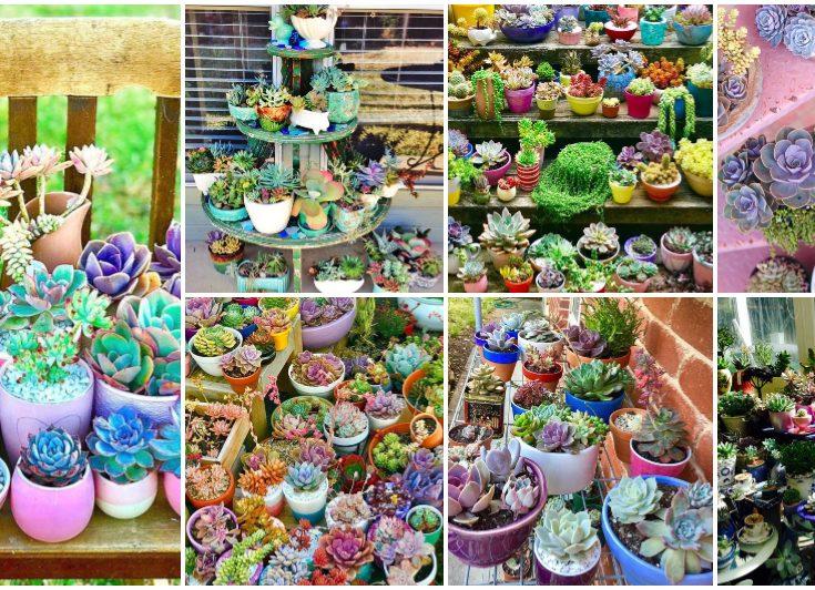 Mini Succulent Garden Designs Archives