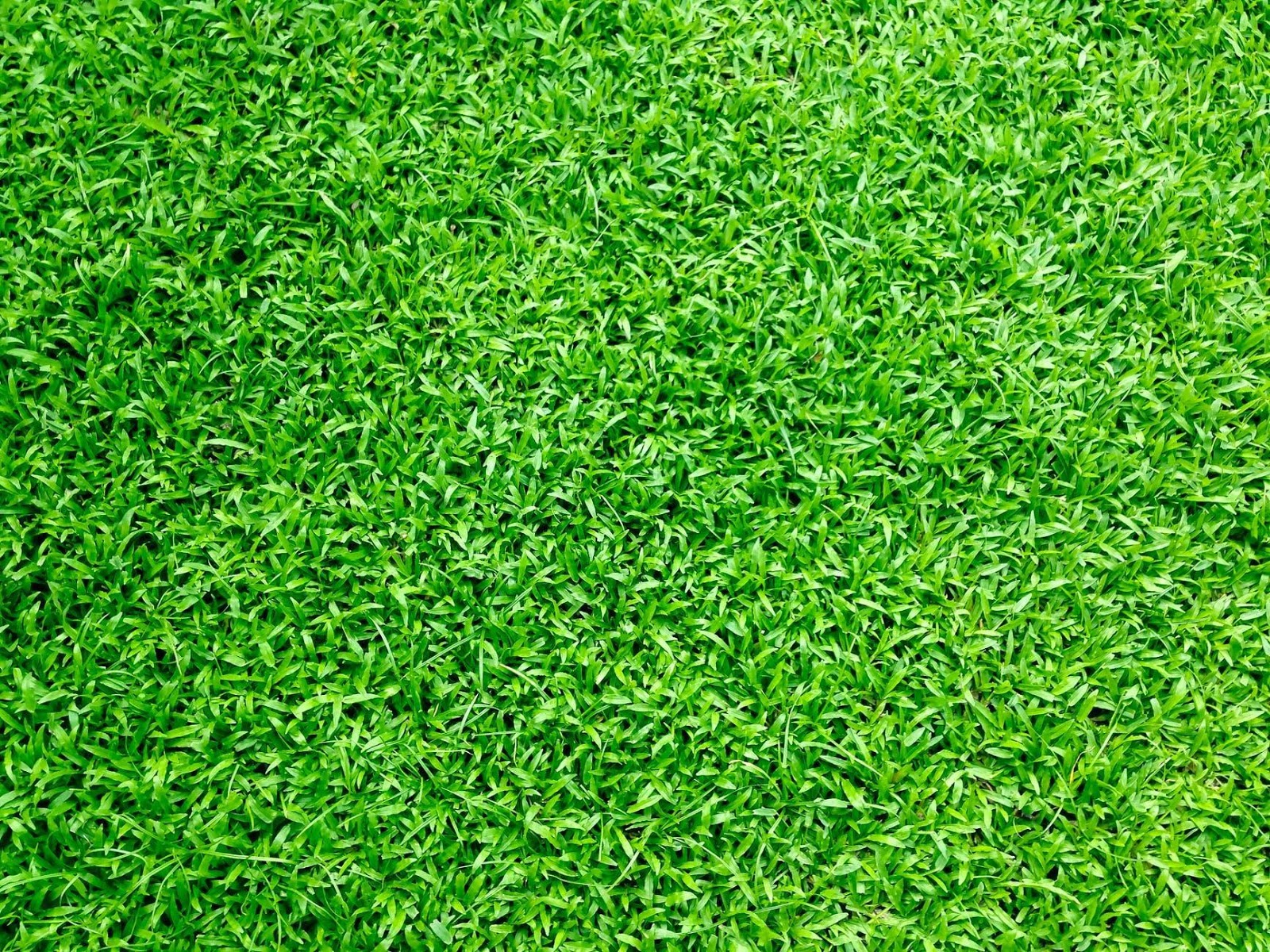 Improvements to make to your lawn this summer